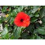 GIF・JPEG:赤い花