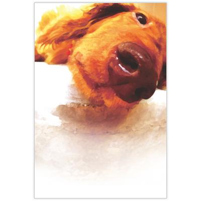 はがき・DM・ポストカードの作成と印刷:DOG_ポストカード02
