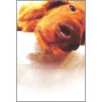 atーdesignの作品発表:はがき作成とDM印刷:DOG_ポストカード02